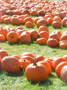 Pumpkins are not just for fall, make squash of all varieties part of your diet all year round!